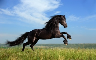 MANE, horse, clouds, freedom, grass