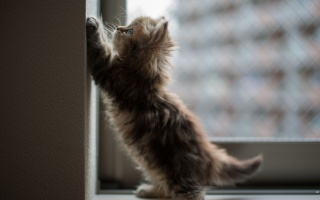 kitten, window, cat, the angle, Daisy, wall, ben torode