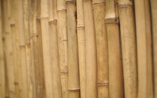stems, bamboo, wood