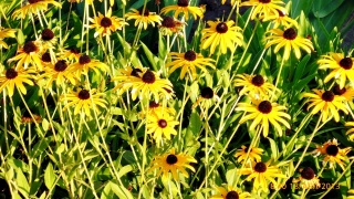 léto, váš záhonek, slunce
