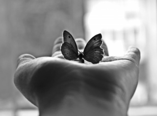 minimalism, palm, black and white photography, butterfly