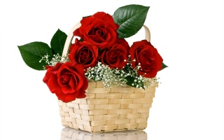 flowers, bouquet, rose, red, nature, flower, basket