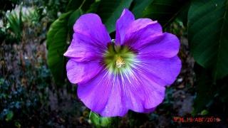 цветы, лето, красота