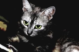 cat, striped, eyes