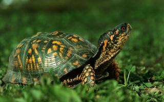 turtle, nature, animals