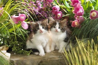 kittens, flowers, friendship, tulips, grass, beautiful