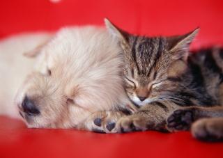 sofa, puppy, kitten