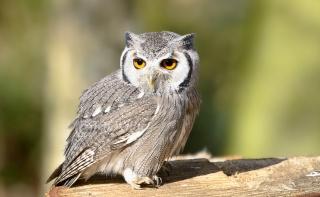 Owl, owl, bird, look, bird, view