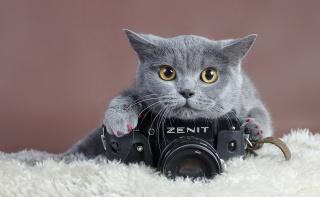 кот, фотокамера, Зенит, ТТЛ