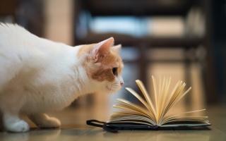 тород, кошка, книга