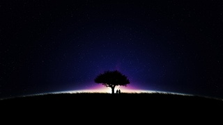 звёзды, ночь, небо, дерево