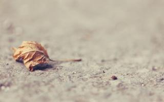 земля, сухой, лист, ПОВЕРХНОСТЬ