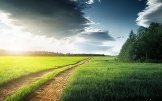 дорога, ліс, дерева, поле, трава, сліди, хмари