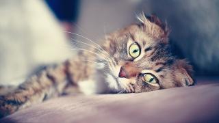 mustache, bokeh, pupils, view, cat, alertness