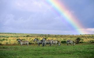 ZEBRA, rainbow, Shroud