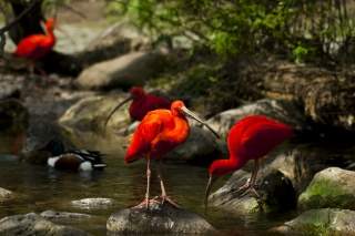 water, moss, birds, stream, trees, IBIS, stones, nature