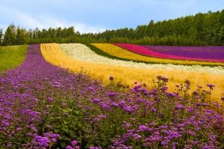 квіти, маки, лаванда, рослини, дерева, Японія
