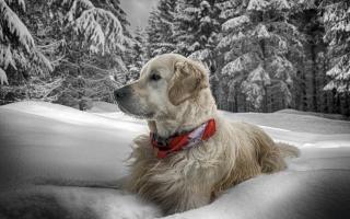 winter, snow, dog
