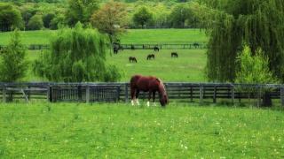 grass, horses, spring, dandelions, green, pasture