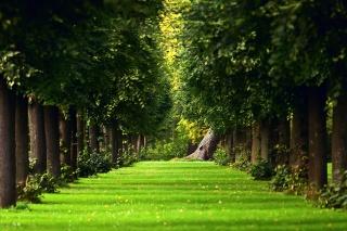 дерева, зелень, літо, природа, трава