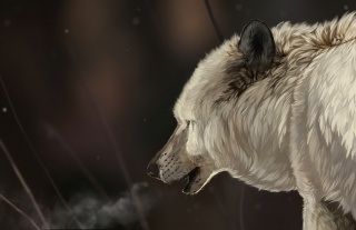 art, muzzle, white, head, fur, snowflakes, winter, snow, wolf
