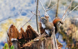plants, moss, blur, nature, stump, branches, Squirrel