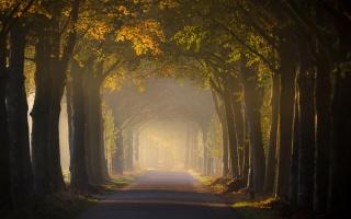 свет, дорога, пейзаж, деревья