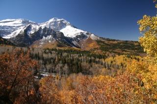 деревья, осень, день, ясный, горы, листья, синее, лес