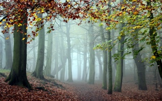 лес, туман, деревья, природа