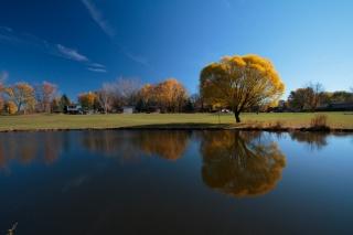 дерево, река, небо, отражение, осень
