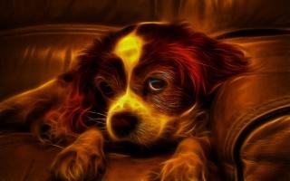 щенок, диван, собака, погляд, вогонь