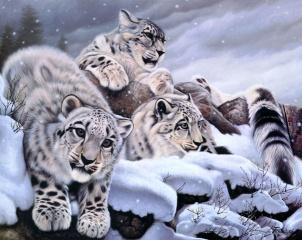 сніг, ірбіс, зима, Снежный барс, арт, Daniel renn pierce