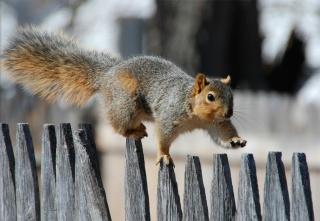walk, Squirrel, fence, promenade, squirrel, the fence