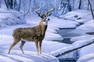 deer, deer, creek, Laura mark finberg, winter, animal, snow, november snow, painting, forest