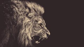 лев, пащу, цар звірів