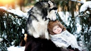 сніг, хаскі, дитина, зима, дружба, собака