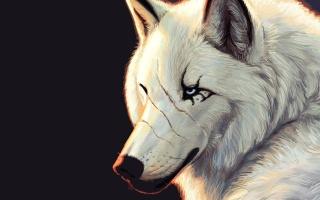 блакитні очі, чорний фон, шрами, вовк, білий