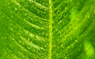 макро, капли, прожилки, лист, зеленый