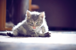 очі, фотограф ann_ann, вуса, кошеня, мило