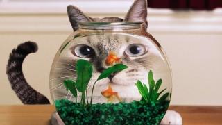 кіт, акваріум, риба, рибка, дивиться