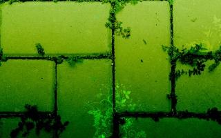 zelená, ростения, umění, textura
