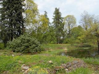 příroda, léto, jezero