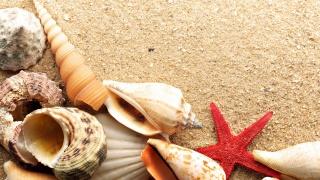 moře, mušle, mořská hvězda, písek, léto