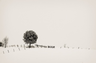 At least, tree, the fence, h. b