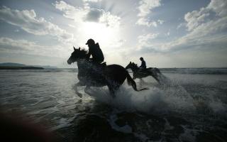příroda, moře, pláž, koně, žokejů, sprej, kapky, foto, pozadí, tapety, Obrázek