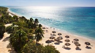 umbrellas, the beach, palm trees, the wind