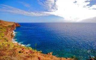 blue sea, shore, greens