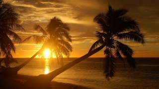 the wind, wave, palm trees, the darkness