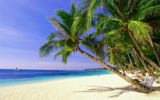 the sun, palm trees, sea, the sky