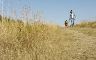 procházka, holka, pes, pes